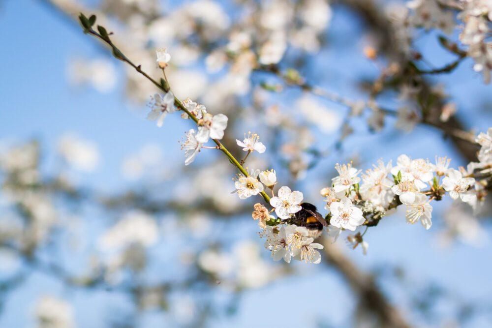 ferme abeille