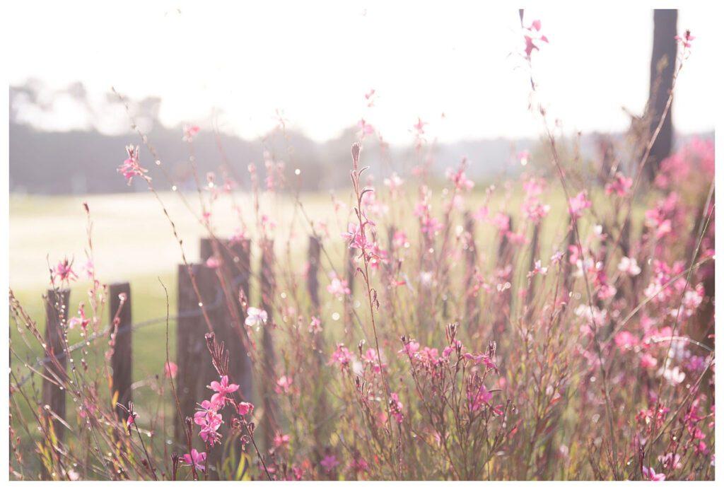 fleurs chiberta golf