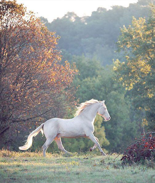 cheval au galop entre les arbres