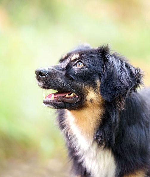photographie chien